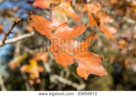 Autumn leaf on tree branch