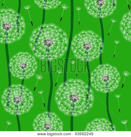 Floral design. Dandelion
