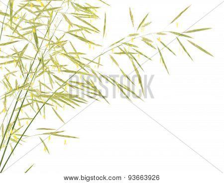 Ears Of Grass