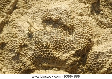 Texture formed by the corals in coastal limestone. Close up