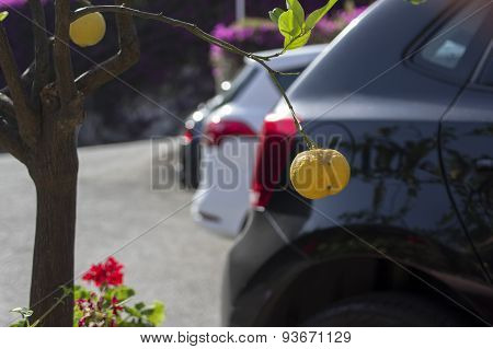 Car And Nature