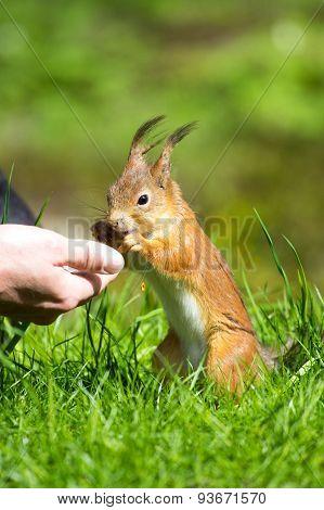Man Feeding A Squirrel