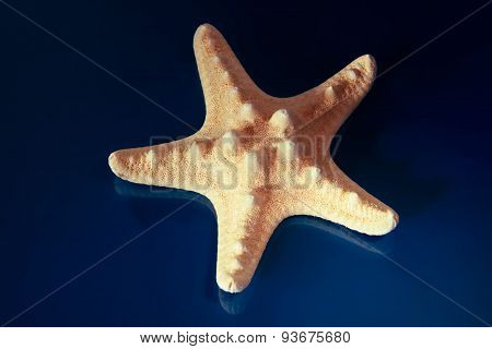 Sea Star Blue Background