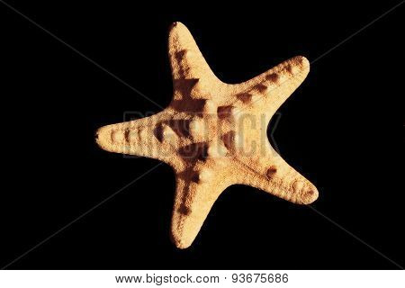 Starfish From Oceans Water On Black Background