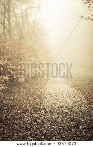 Pathway Through The Misty Autumn Park
