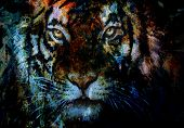 foto of tigers-eye  - tiger collage on color abstract background rust structure wildlife animals - JPG