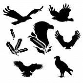 foto of animal silhouette  - Eagle set of black silhouettes - JPG