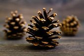 stock photo of pine cone  - Three pine cones nice and dry on brown wooden table - JPG