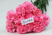 image of carnation  - Good luck card with pink carnation flowers - JPG