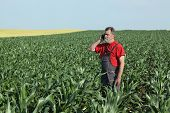 picture of inspection  - Farmer inspect quality of corn and speaking with mobile phone - JPG
