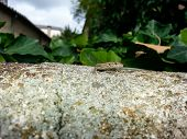 stock photo of lizards  - a small lizard sunning on a slope stone of the dangers - JPG