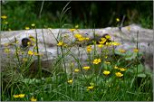 stock photo of meadows  - On the meadow lay a log of wood - JPG