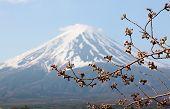 pic of mount fuji  - Mount Fuji and sakura not blossom at Kawaguchiko lake side - JPG