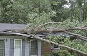 image of impaler  - A large oak tree falls on a small house during a storm and splits it nearly in two - JPG