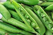 pic of pea  - Freshly picked sweet green peas. peas in open pods