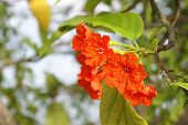 foto of hibiscus flower  - A flowering Hibiscus near the ocean in a tropical climate - JPG