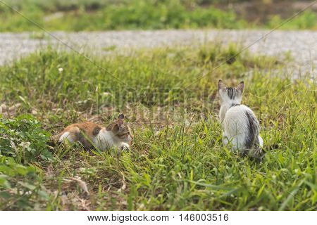 little cat play in the outdoor grassland