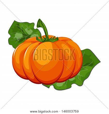 Fresh orange halloween pumpkin isolated on white vector. Orange autumn food fresh pumpkin vegetable holiday decoration. Seasonal ripe isolated pumpkin fresh october halloween symbol.
