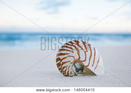 nautilus sea shell on golden sand beach with waves in  gentle sunrise light, shallow dof