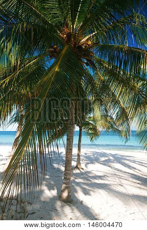 Palm tree with leaf, blue sea and tropical white sand beach under the sun