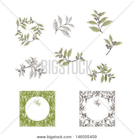 Yerba Mate Tea Leaf and Plant Design Collection