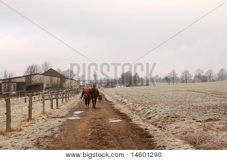 Woman Leads The Horse On The Road.