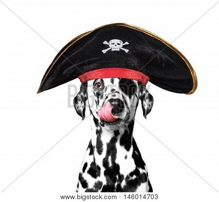 dalmatian dog in a pirate costume -- isolated on white
