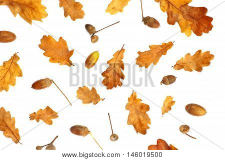 Isolated autumn print with acorn and yellow oak leaves on a white background