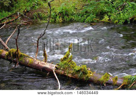 Fast taiga river in the northern taiga