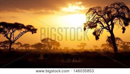 Typical african sunset with acacia trees in Masai Mara Kenya