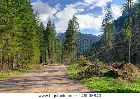 Spring sunny mountain landscape. Gravel forest road in a beautiful mountain valley.