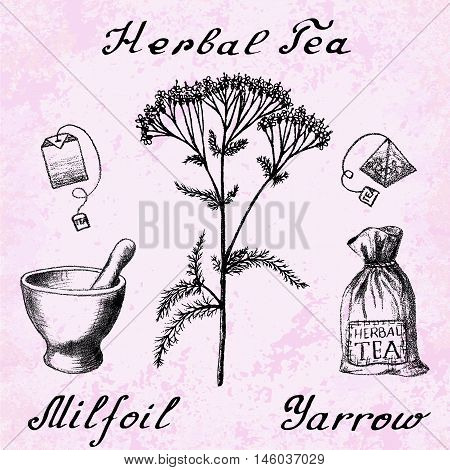 Yarrow Achillea millefolium hand drawn botanical illustration. Vector drawing. Herbal tea elements - tea bag bag mortar and pestle. Medical herbs. Lettering in English languages. Grunge background