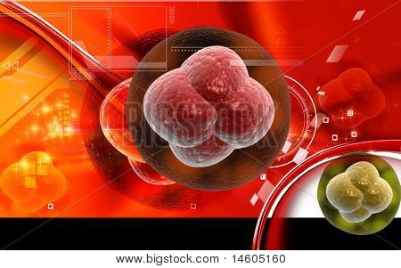 Digital illustration of Ovum cell in 3d on COLOR background