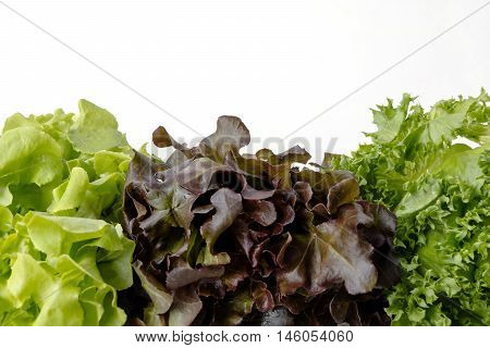 Organic vegetables are grown in the north of Thailand by the valuable project Salad leaves with Green Oak Lettuce on white background