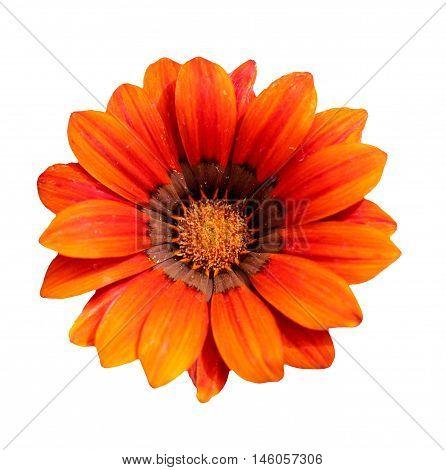 Abstract creative colourfull garden flower scene England