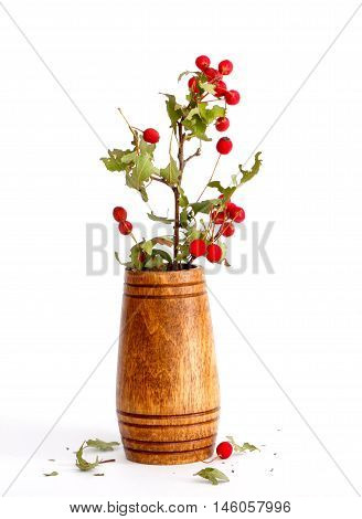 picture of a dry hawthorn in a wood vase on white background