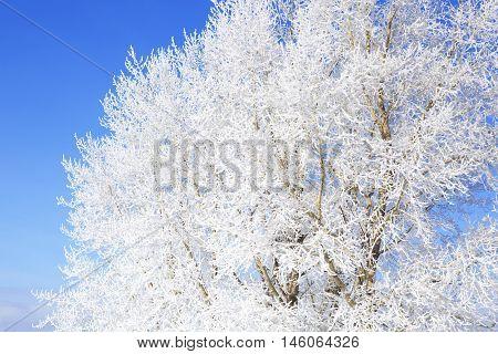 Winter Background, Landscape. Trees In Wonderland.