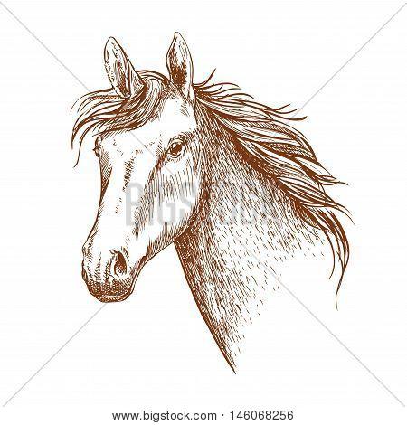 Arabian stallion horse head sketch for equestrian sporting design. Horse racing symbol or riding club badge design