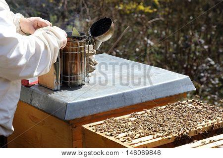 bee keeper is preparing a smoker near bee hive
