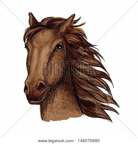 Brown racehorse stallion sketch with head of purebred horse of arabian breed. Horse racing, riding club or equestrian sporting competition themes design