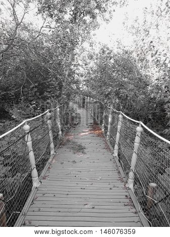 Horror bridge. Image of old wooden bridge