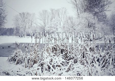 Toned Winter Landscape