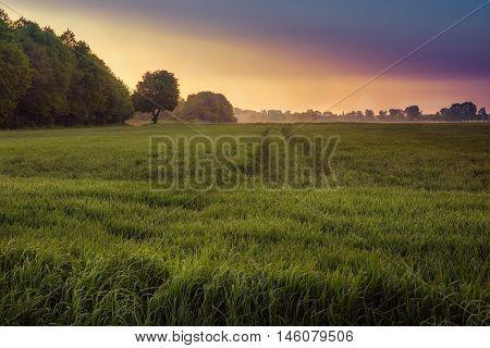 Meadow full of grass at dawn. Masuria Poland. May landscape.