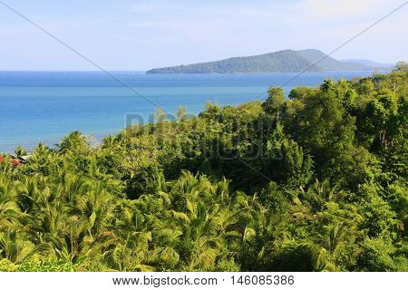 Lush forest of Koh Rong island Cambodia Southeast Asia