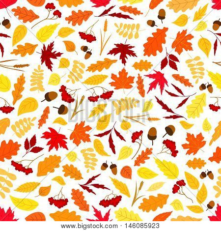 Autumn background with seamless pattern of orange, red and yellow fallen leaves, acorns, dry herbs and branches of rowanberry fruits. Nature theme design