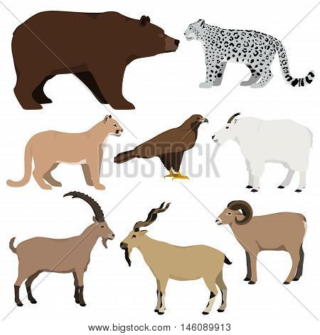 Vector set of cartoon mountain animals. Grizzly bear mountain goat markhor nubian ibex mouflon puma snow leopard golden eagle.