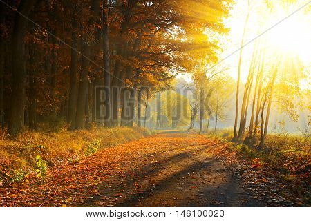 Beautiful Autumnal park. Nature scene with sunlight rays.