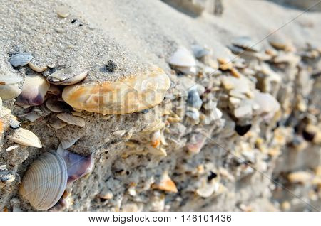 Mound Of Shells, Stones And Sand On The Seashore.