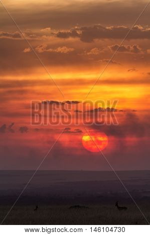 Typical african sunset in Masai Mara Kenya Africa. Vertical shot
