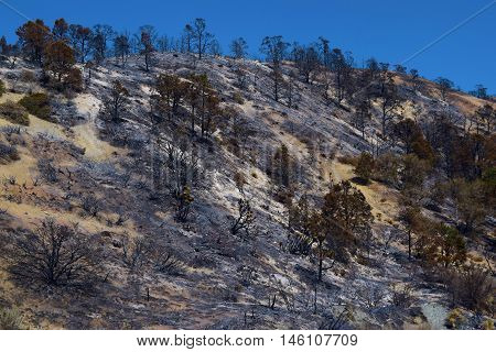 Remnants of a wildfire which burned a forest on a hillside taken near Wrightwood, CA